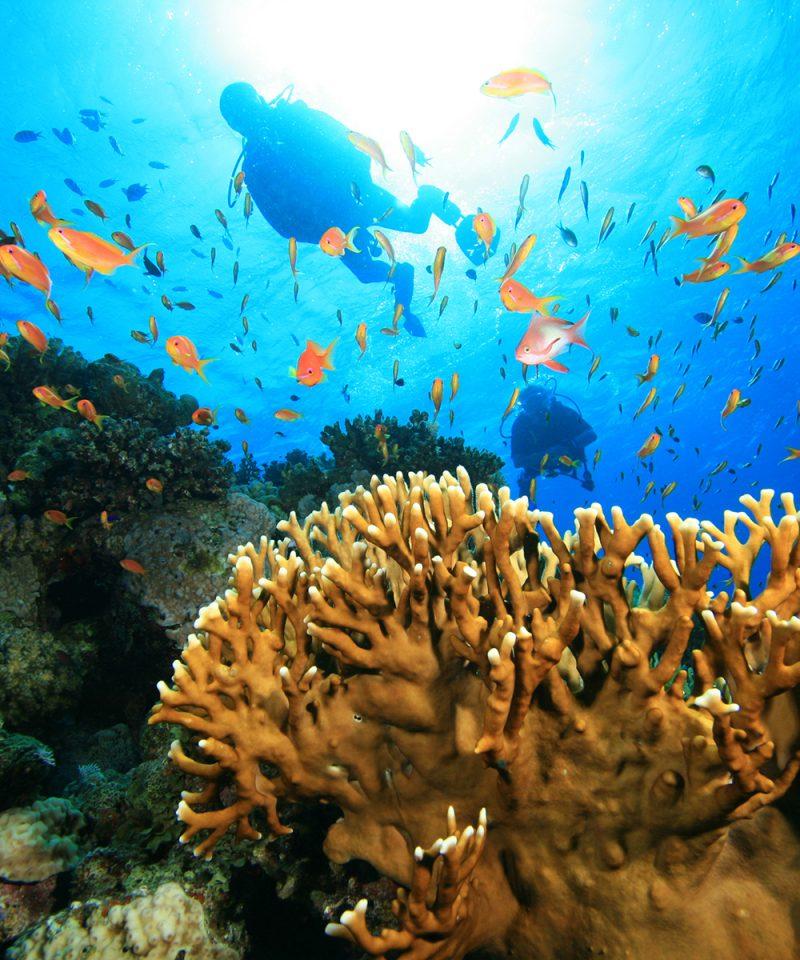 Scuvba divers in Tenerife