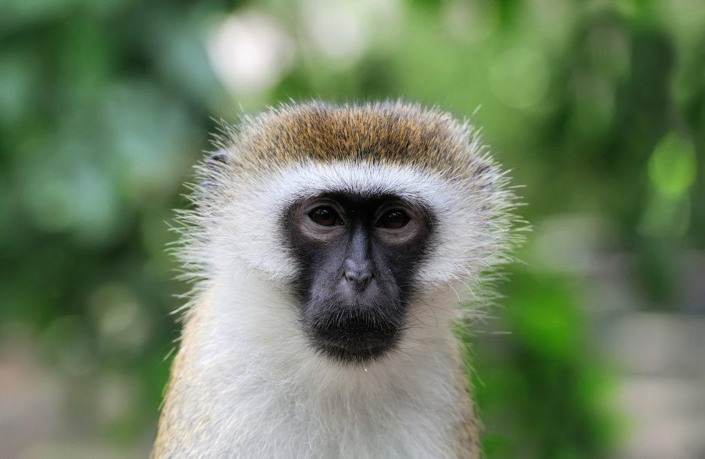 Tenerife Monkey Park