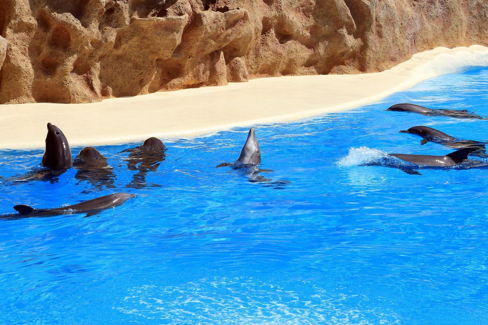 dolphins at loro park tenerife