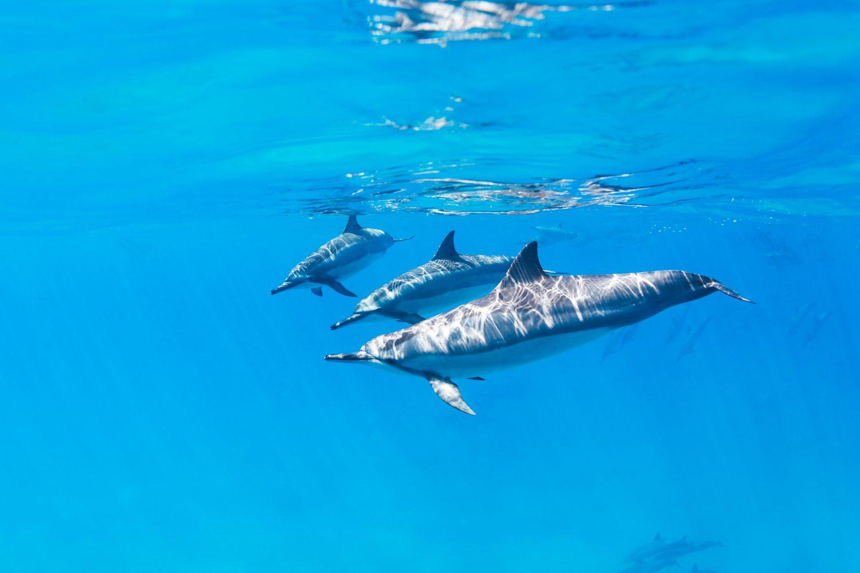 Dolphin Watchin Trips in Tenerife