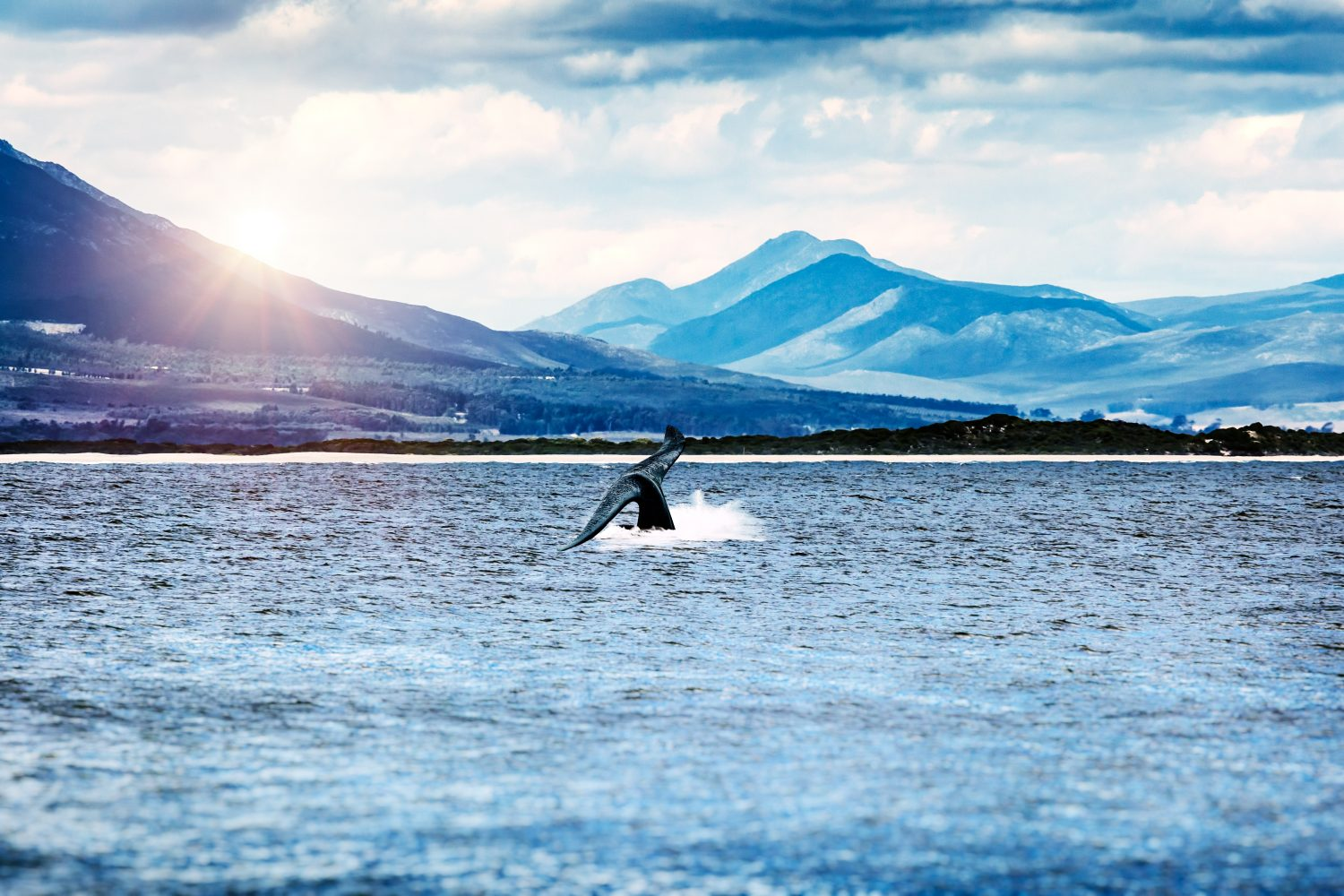 Whale watching trips in Tenerife